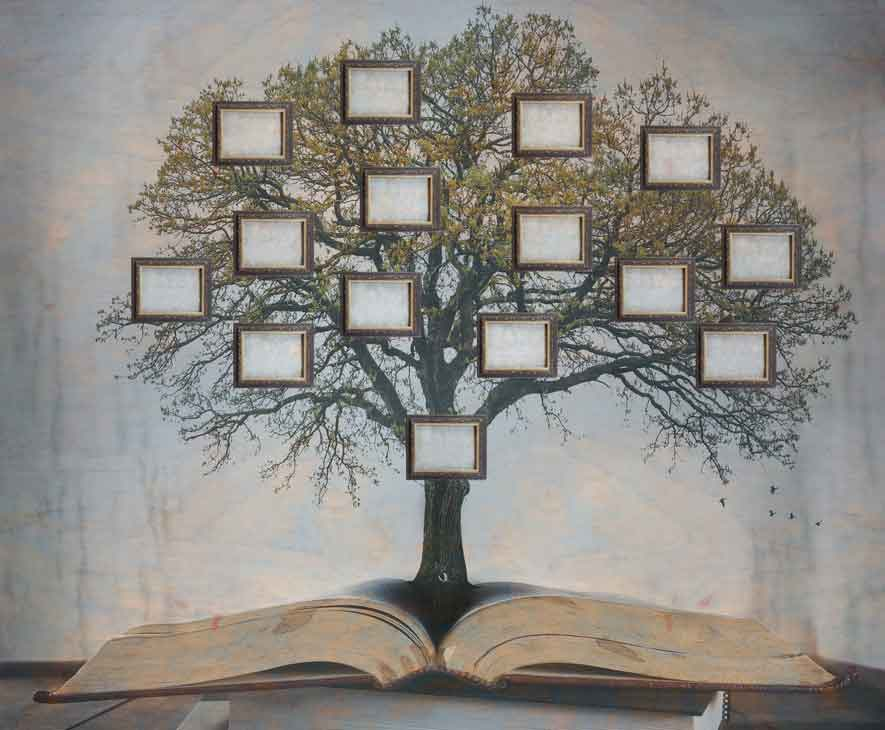 Illustration of a family tree growing out of an open book