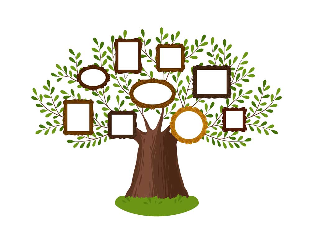 A family tree illustration with picture frames hung over it